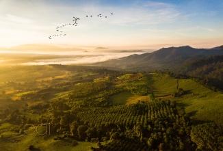 pai mist with birds